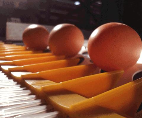Egg Handling