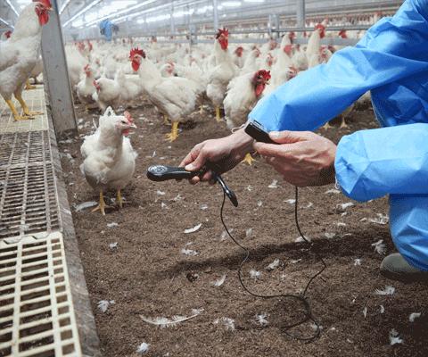 Poultry Management