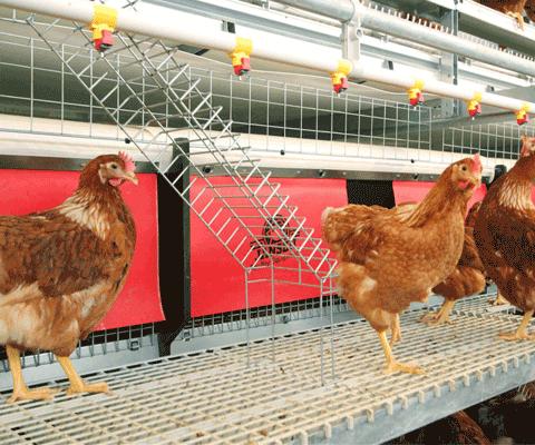 Aviary Systems